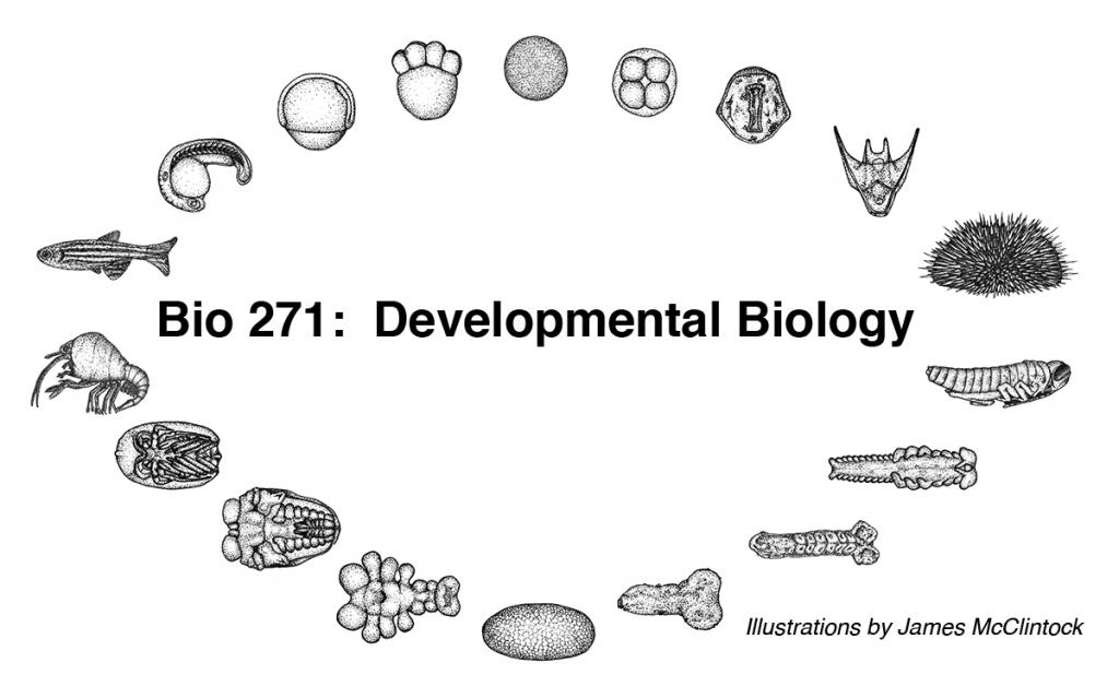 Bio271LOGO